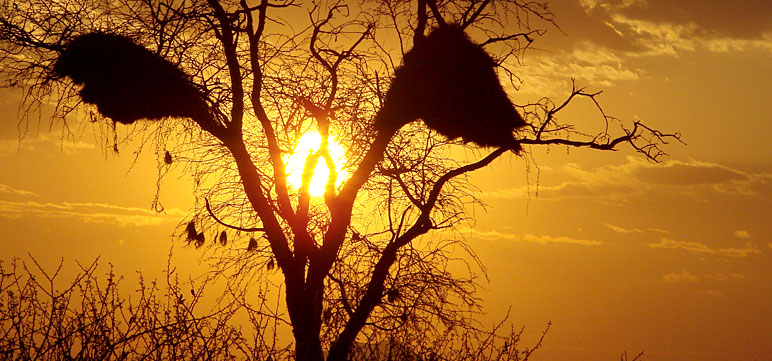 sunset, african namibia hunting safari onduri